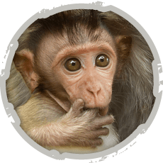 "[themify_button style=""large flat rect"" color=""#ED8000"" text=""#ffffff"" link=""http://www.internationalanimalrescue.or.id/macaque-rescue/"" ]Macaque Rescue[/themify_button]"