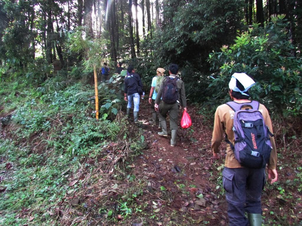 Tim Survey Release Monitoring YIARI menyusuri jalan setapak menuju hutan kawasan hutan Taman Nasional Gunung Halimun-Salak untuk pelatihan identifikasi jenis pohon.
