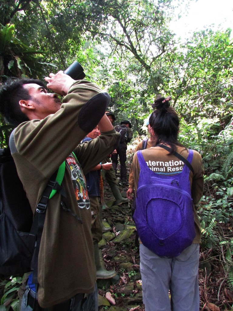 Anggota tim mengamati buah dan bunga pada pohon yang tinggi.