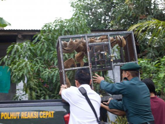 People discovered to be illegally trading wild animals in Indonesia risk a five year terms in jail (International Animal Rescue)
