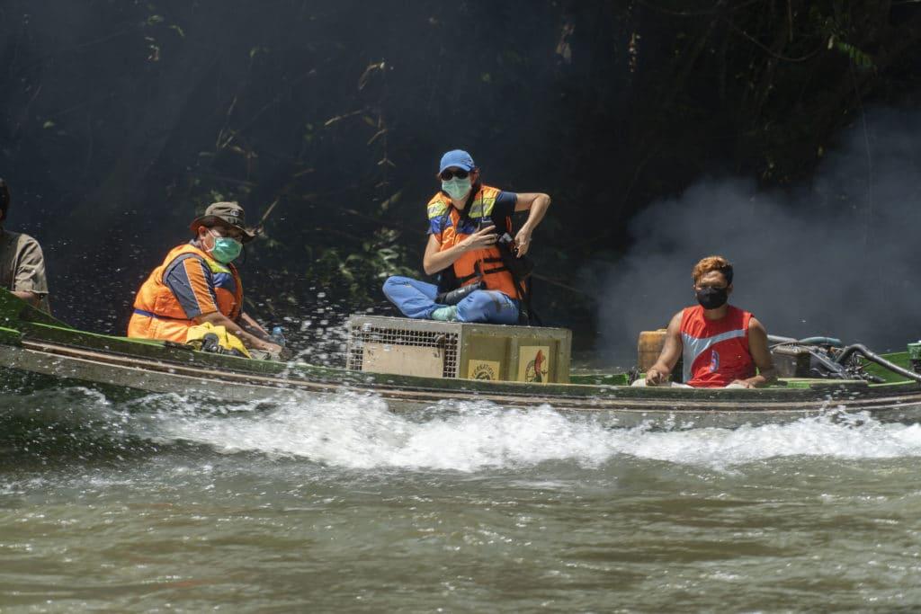 Menyusuri sungai di kawasan Taman Nasional Bukit Baka Bukit Raya (TNBBBR) Kalimantan untuk melepasliiarkan orangutan.